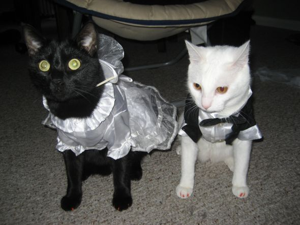 My cats are excited for the wedding closed my cats are excited for the wedding junglespirit Images