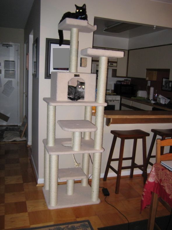 Build a furniture with plan this is floor to ceiling cat for Diy cat tree