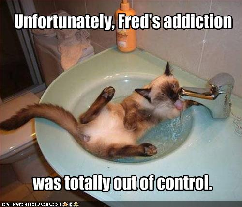 funny-pictures-your-cat-is-addicted-to-water.jpg