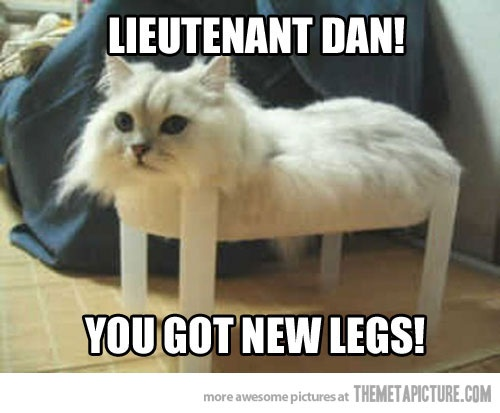 Funny Memes To Cheer Up A Friend : Funny cat pictures to cheer someone up ma