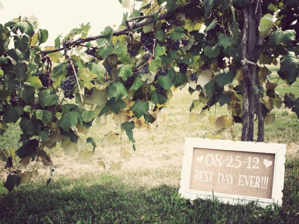 Winery Ceremony Decor