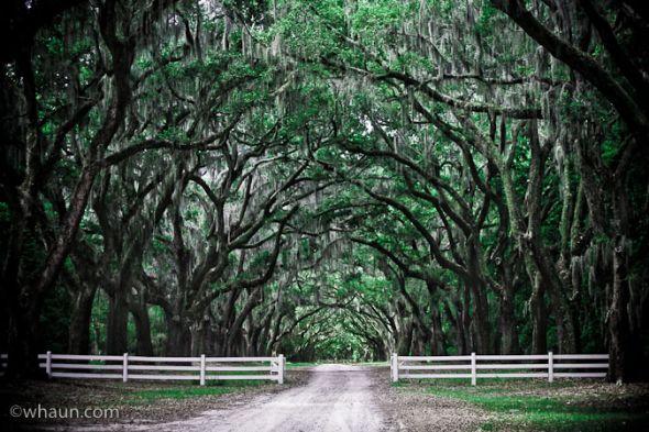 Wedding locations in savannahcharlestonnew orleans need your ideas junglespirit Choice Image