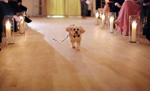 NonTraditional Church Decor wedding Dog Ring Bearer 2 years ago