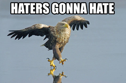 haters_gonna_hate_eagle.jpg