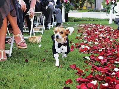 Including the Fur Babies :  wedding animals dogs wedding Dog Weeding