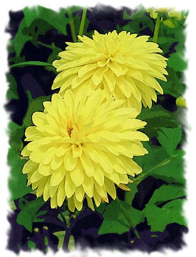 Yellow flowers closed yellow flowers mightylinksfo