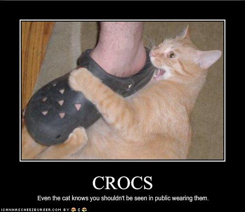 funny-pictures-cat-hates-your-shoes.jpg#lol%20cat%20crocs
