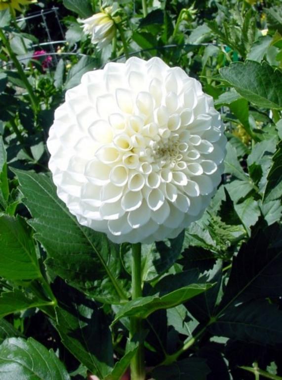 Wedding Flowers In Season In January : Flowers in season january anyone else frustrated