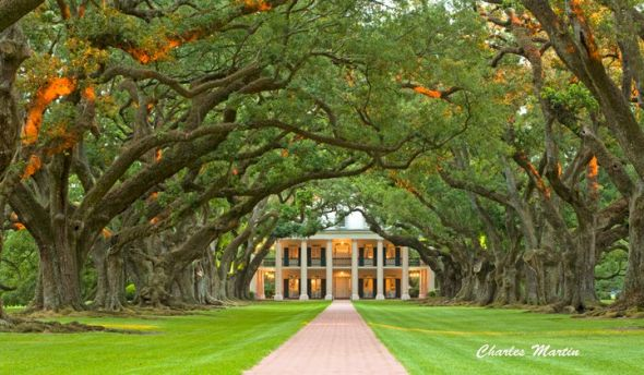 My 11.11.11 Wedding &#038; Reception Venue - Oak Alley Plantation :  wedding ceremony louisiana new orleans 1 oak alley plantation reception vacherie 167740 10150114543869703 222733839702 7666655 6795483 N